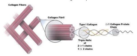 colágeno para que serve fibras